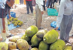 Organic Mango mela draws sizeable crowd in city