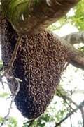 Honey bees secret world of heat 'revealed'