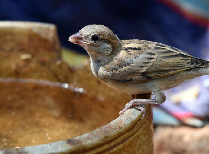 Water bowls to help animals & birds beat the summer heat