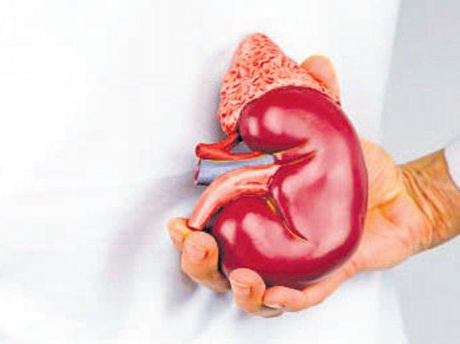 Image result for Kidney Health