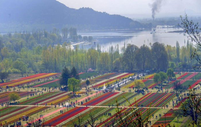 With Tulip and almond bloom expected by end of this month, a considerable increase in permissions being sought for film shoots is being witnessed. PTI file photo