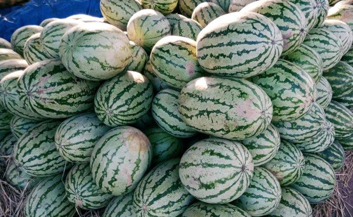 Watermelons from Tamil Nadu being sold in Kadur in Chikkamagaluru.