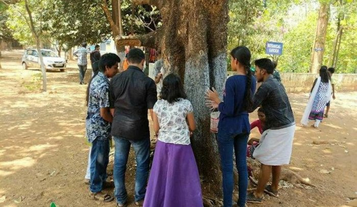Volunteers of Heartfulness Green apply a mixture of herbal extract and natural lime to a tree in Thrissur, Kerala, on Monday.