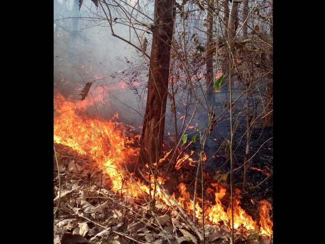 This call has intensified after increasing cases of forest fires, especially the one which occurred in Bandipur tiger reserve. DH file photo