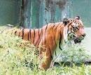 Dhoni's feline love in Mysore