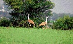 Bird-watchers' hopes take wings in Bellary district