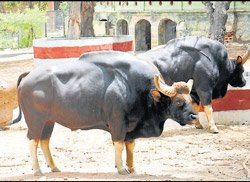 Mysore zoo to take up conservation responsibilities