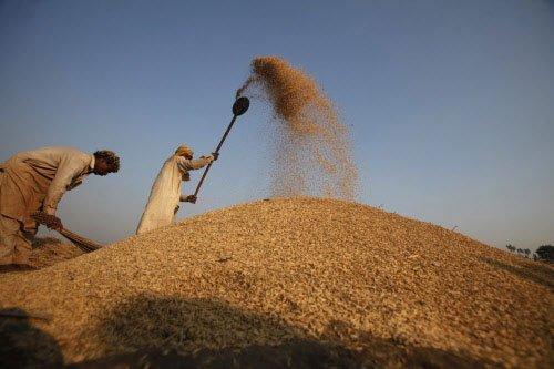 No benefit challenging US wheat patent, Centre tells Supreme Court