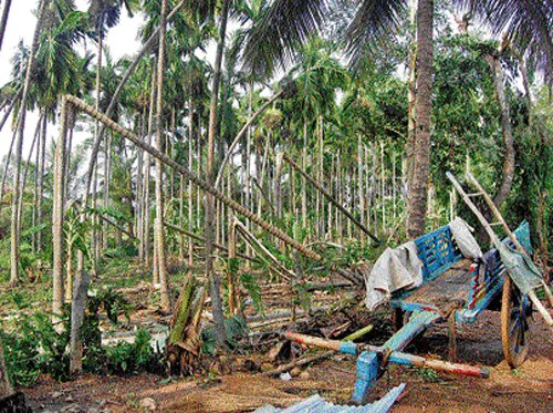 Losses put at Rs 3.64 cr in Shimoga