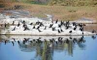 Migratory birds give Chikmagalur a miss