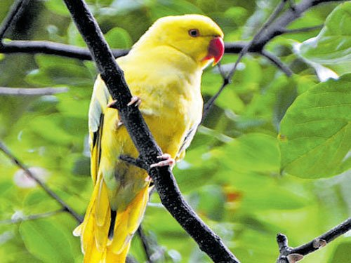 Police rescue protected parakeets, two men from Chennai arrested