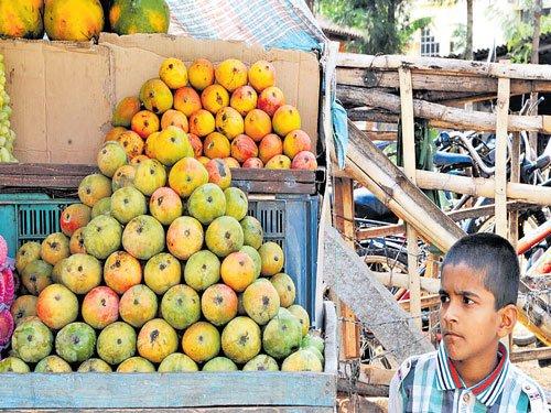 'King of fruits' arrives in Chikkamagaluru markets