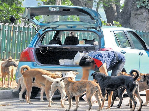 Stray dogs also have a right to live: Supreme Court