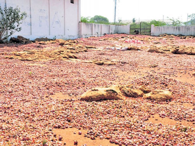 Gadag's onions come full circle as rotting stock turns manure