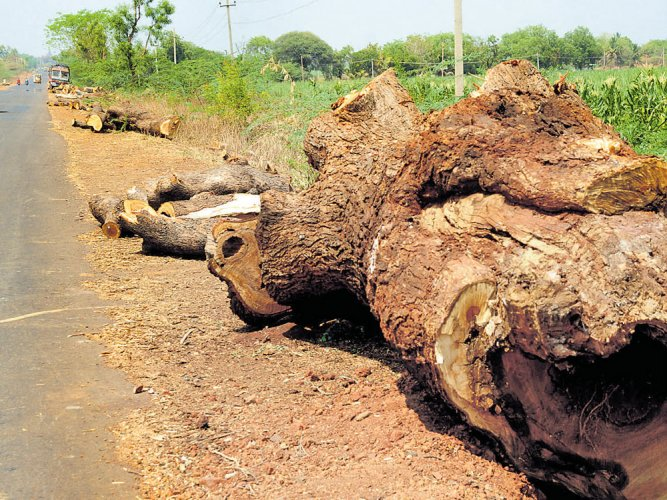 1,422 trees axed in Bagalkot dist for widening of NH 218