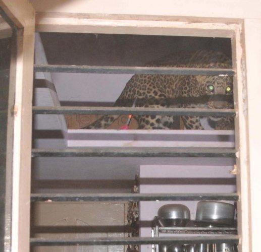 Leopard enters house in Tumakuru