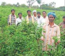 Farmers in Kolar find tur as alternative to ragi