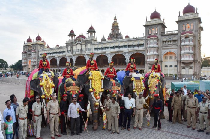 This year, 12 elephants, including four she-elephants from four camps, are in the city on the premises of the Mysuru Palace, rehearsing for the Jamboo Savari. (DH Photo)