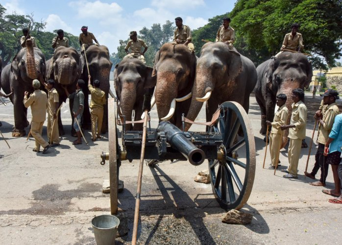 Dasara elephants were familiarised with the sound of cannons at Amba Vilas Palace in Mysuru on Thursday.-