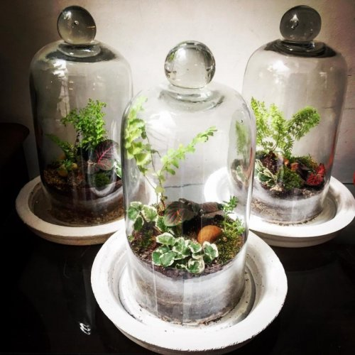 Small Is Big With These Glass Terrariums Deccan Herald