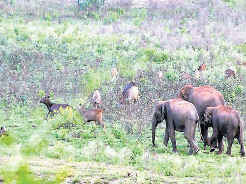 Water scarcity hits Bandipur Tiger Reserve