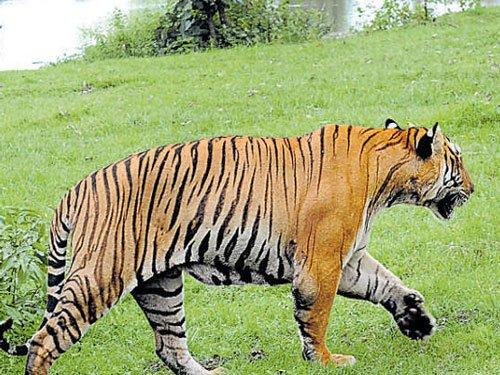 Forest dept eyes 500-acre land donation near Bandipur