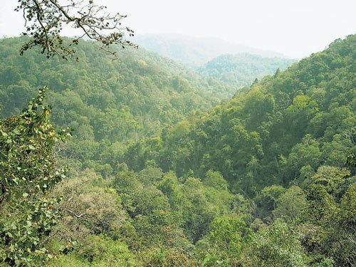 Forest dept eyes 500-acre land donation near Bandipur