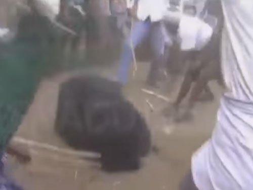 Bear beaten brutally by Chitradurga villagers, video goes viral