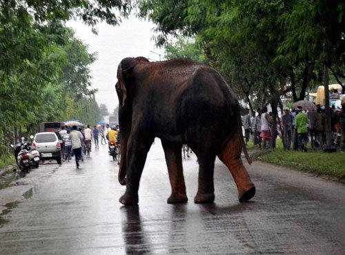 Elephant kills woman devotee at Sabarimala