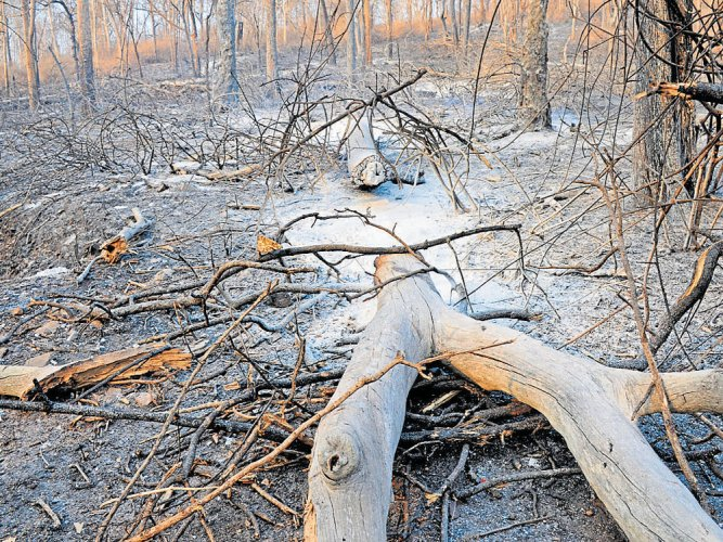 High-level committee to probe fire in Bandipur forest