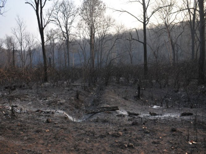 Forest dept seeks food donations for Bandipur firefighters