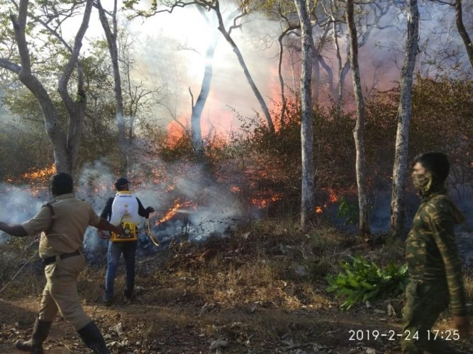 Fire brigade personnel, volunteers and forest guards douse the flames inside Bandipur forest. Photo by special arrangement