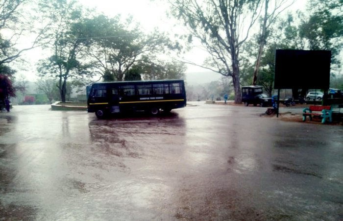 Parts of Bandipur forest experience thundershowers for about 45 minutes on Monday evening. DH PHOTO