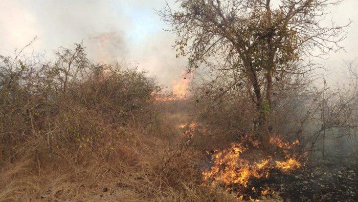 The wildfire at Kundukere Forest range under Bandipur Tiger Reserve in Gundlupet taluk of Chamarajanagar district on Saturday. dh photo