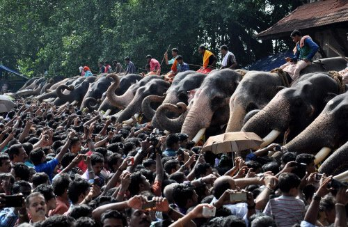 SC directs registration of Kerala temples having elephants
