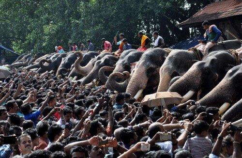 SC for registration of captive elephants in Kerala