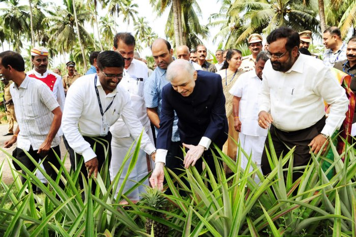 Kerala Governor P Sathasivam looks at a pineapple during his visit to CPCRI for inaugurating innovators meet in Kasargod on Saturday.