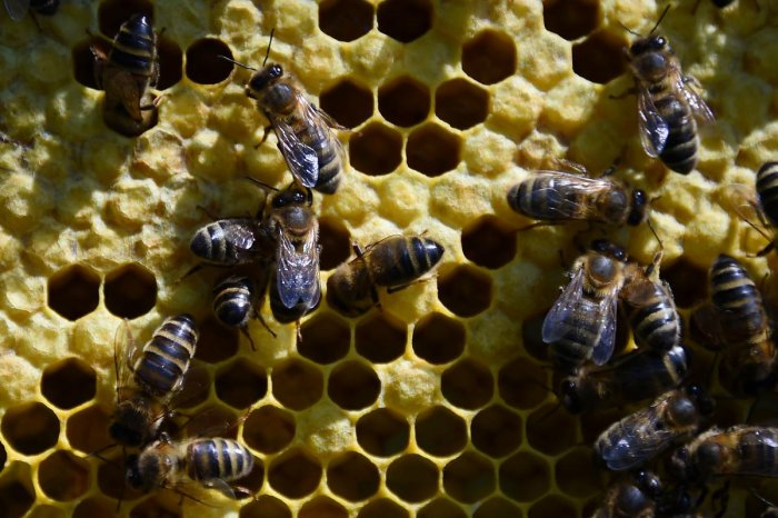He was stung by a swarm of bees and became unconscious, Paladee police station in-charge Hari Om Meena said. AFP File photo