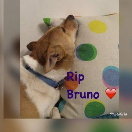 Bruno, the female dog, bludgeoned to death in Domlur.