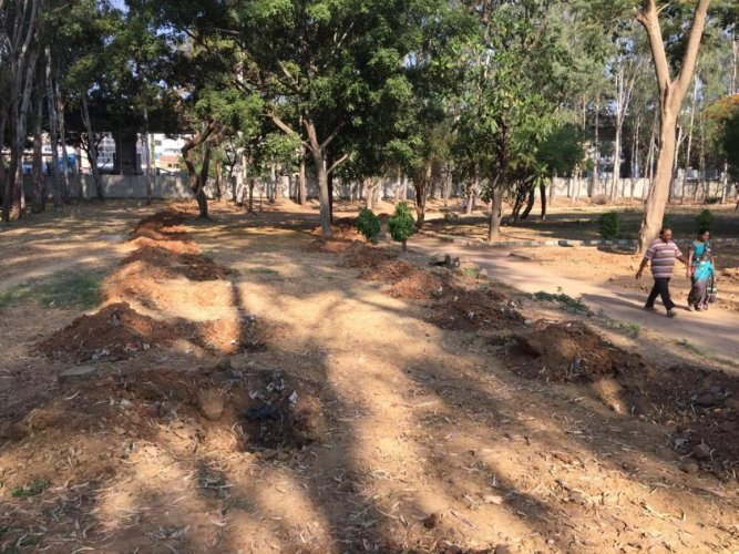 The horticulture department is preparing to plant aromatic plants in Lalbagh.