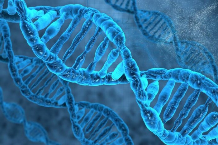 McDade said he was surprised to find so many associations between socioeconomic status and DNA methylation, across such a large number of genes. File photo