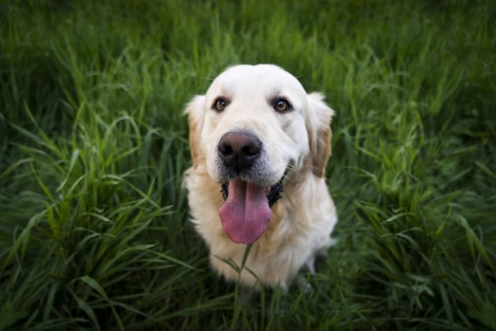 Dogs have smell receptors 10,000 times more accurate than humans', making them highly sensitive to odours we can't perceive, said researchers who presented the study at the American Society for Biochemistry and Molecular Biology annual meeting in Florida,
