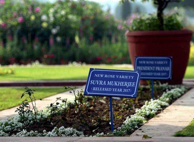 Mughal Gardens to display roses named after President, wife