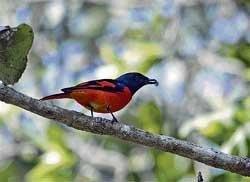 Bird spotting at Dandeli
