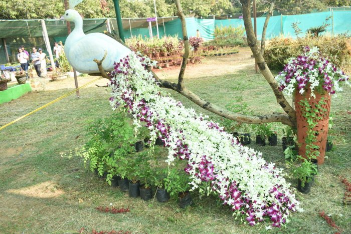 A white peacock made of orchids on display as part of the exhibition organised by Alia Orchid Care at Kadri Park.