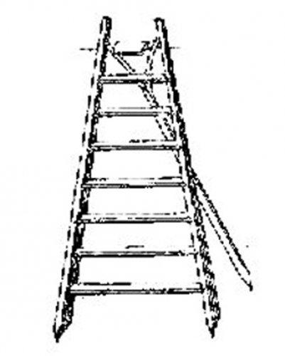 Picture Credit: commons.wikimedia.org/ Ed. Lucas - Pomologische Monatshefte, 1. Heft