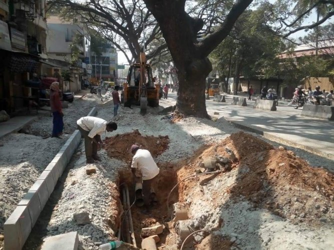 This picture, taken during 'white-topping' in Basavanagudi, shows how roads and footpaths are built with concrete choking trees.