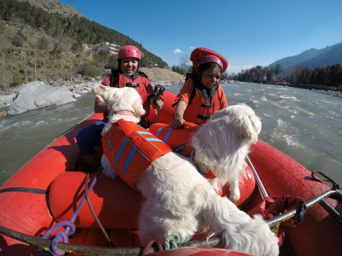 Deepthi's golden retrievers on their first river rafting in Kulu. She recently took them on a 23-day trip across India
