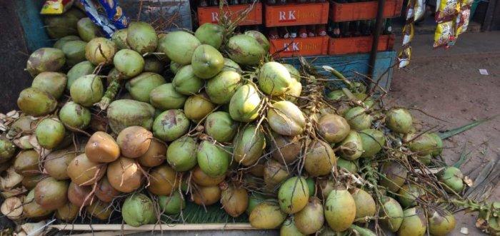 Tender coconut is in great demand in Mangaluru.