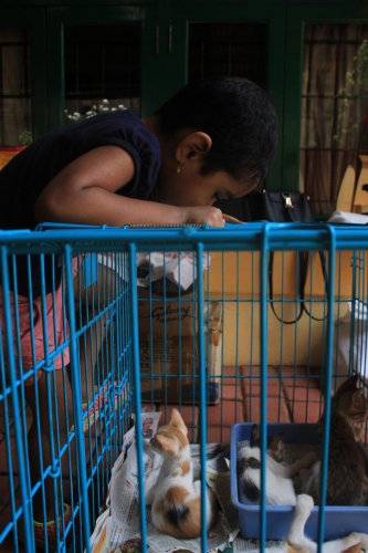 A child looks curiously at a puppy at the adoption drive organised by Animal Care Trust.